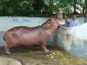 zoo BKK