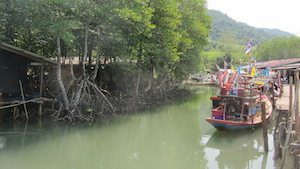 Mangroves on thai island