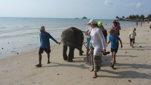 elephant on Thai island