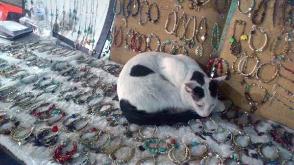 cat khaosan bangkok
